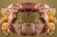 flayed-pig-4x6